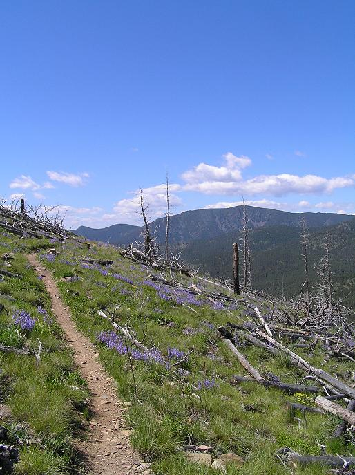 Trail Pics-ginnytrail1.jpg