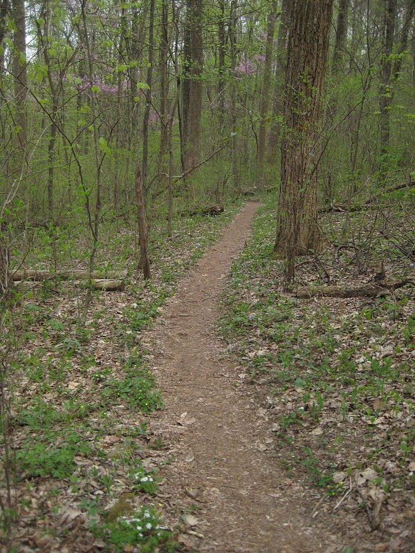 Post a pic of your fave trail ( ever )-goat-img_7782.jpg