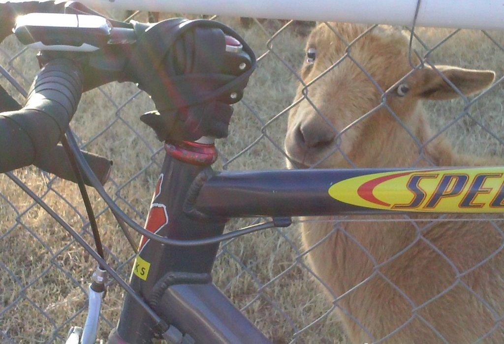 Happy New Year-goat.jpg