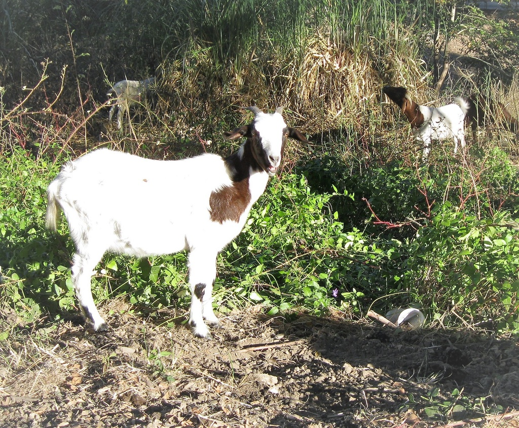 See ya. Annadel ride, 11-3-18.-goatse.jpg