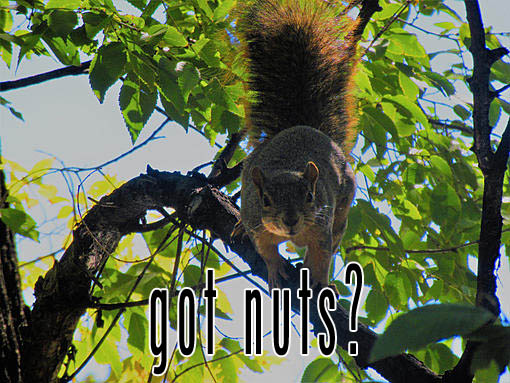 Name:  got nuts1.jpg Views: 48 Size:  119.9 KB