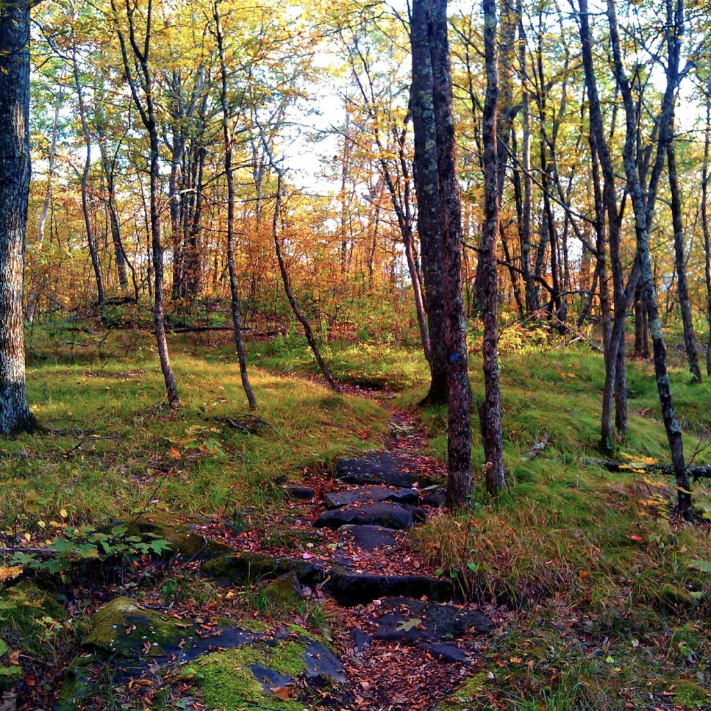 bike trails near manchester vt.-grassy-knoll-foliage.jpg