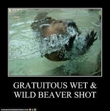 Name:  gratuitous beaver shot 2.jpg Views: 1472 Size:  8.7 KB
