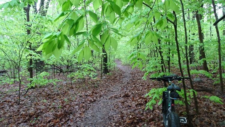 Daily fatbike pic thread-green1.jpg