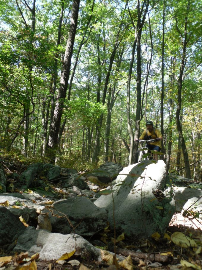 Roaring Creek With Mini & The Boy-gthb.jpg