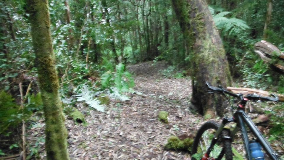 Big Island Trails-guavaafter.jpg