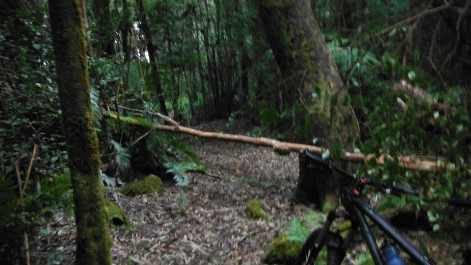 Big Island Trails-guavabefore.jpg