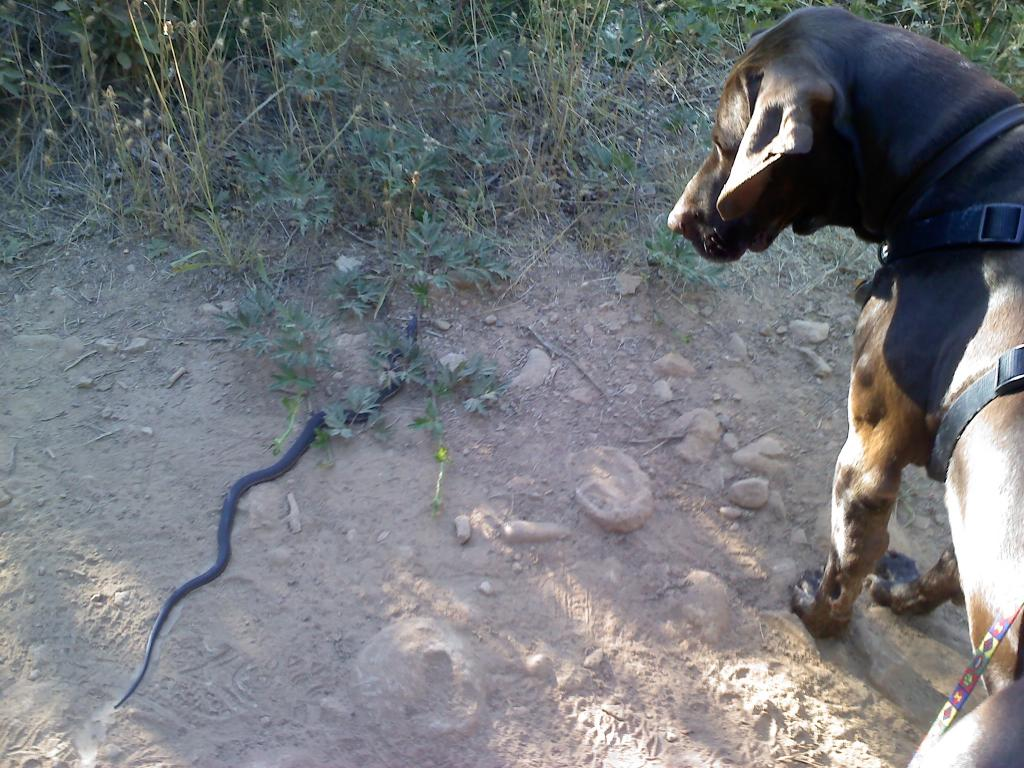 Wildlife you have seen on trail...post your pics...-gunner-snake.jpg