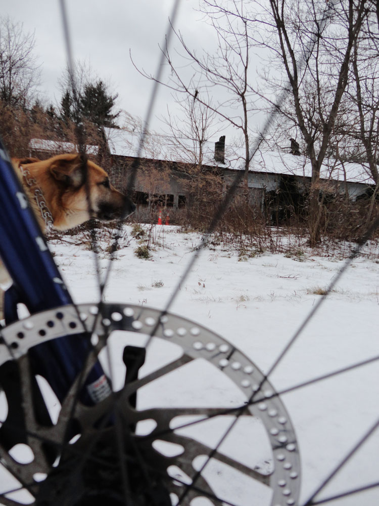 Bikejor thread!-h1.jpg