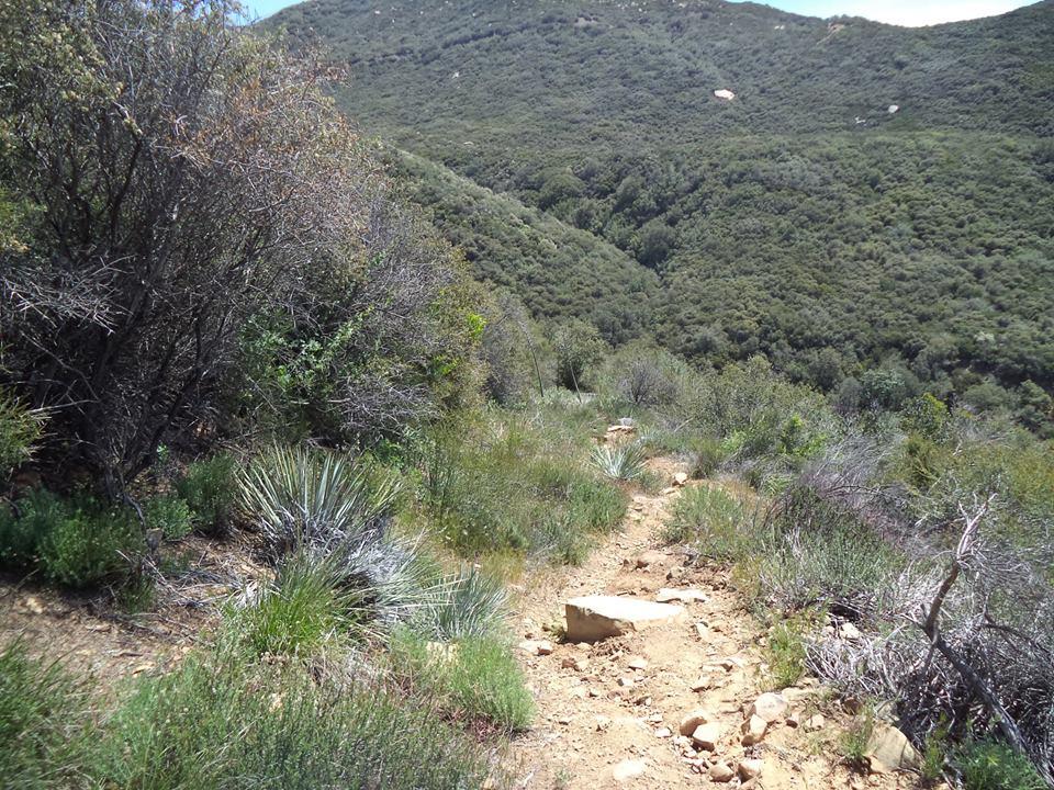 horn canyon: Ojai-h3.jpg