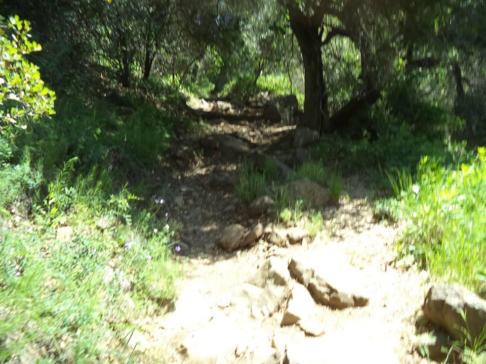 horn canyon: Ojai-h5.jpg