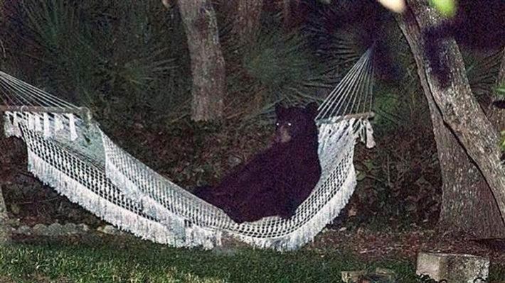 """Bar Hopping Bear""-hammock-bear.jpg"