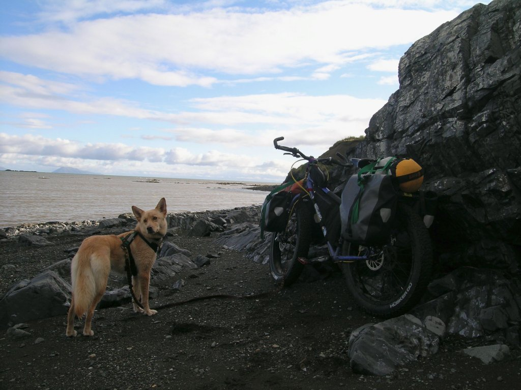 K-9 Riding buddies!-harness-getup.jpg