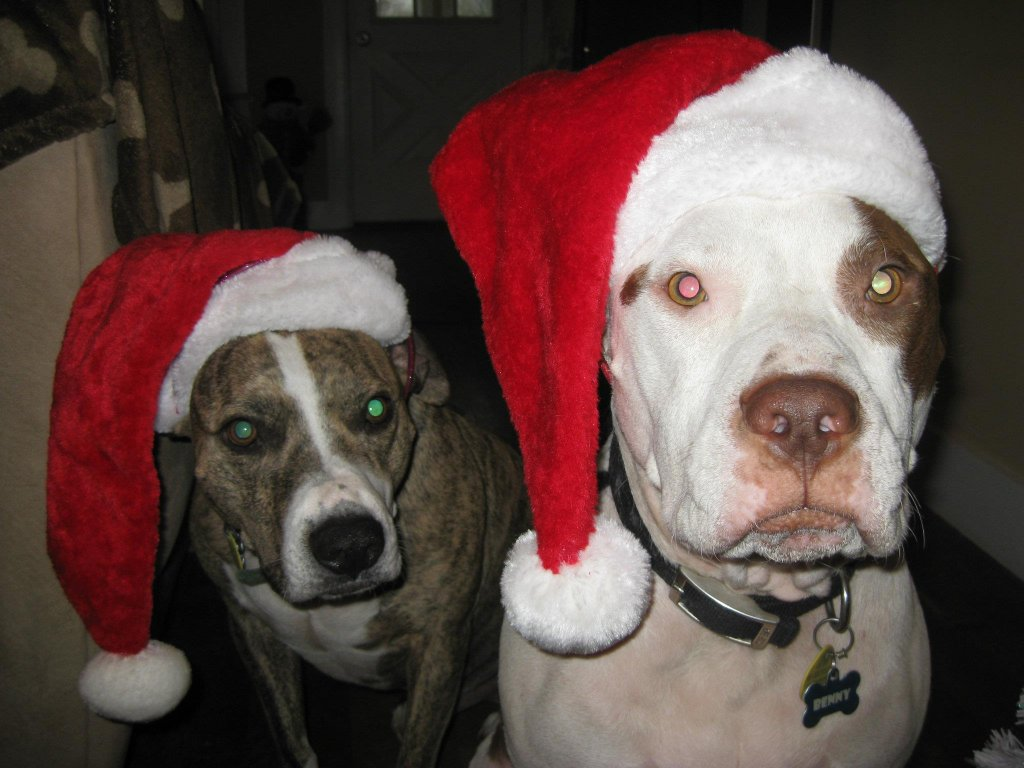 pit bull passion-hats.jpg
