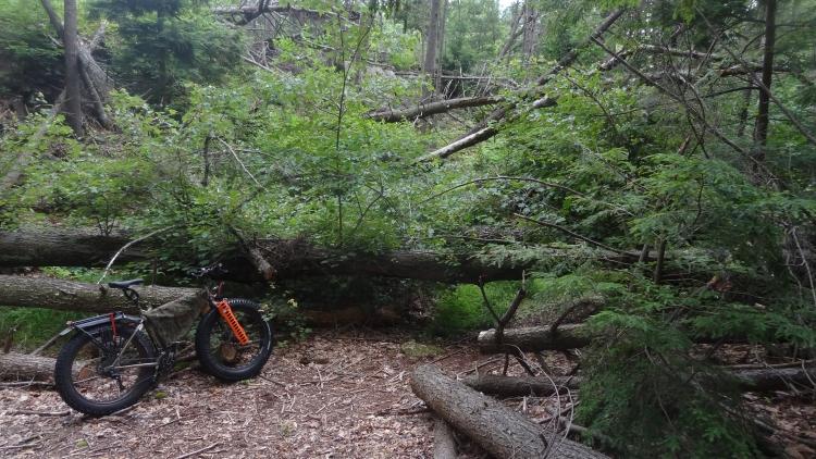 Daily fatbike pic thread-heather-ln-treewk04.jpg