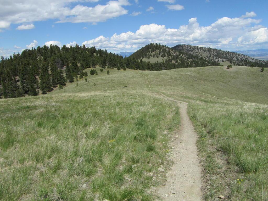 Mt Helena Ridge (and other local trails)  Trip Report-helena-nf-mtb-5.26.17-038.jpg
