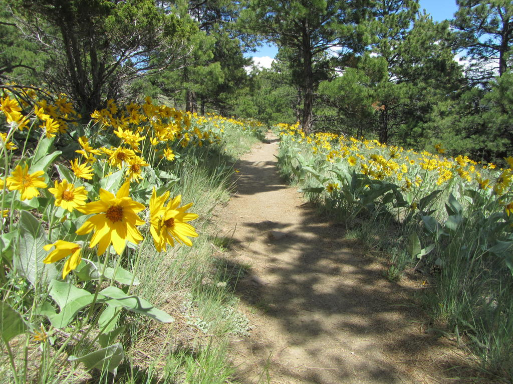 Mt Helena Ridge (and other local trails)  Trip Report-helena-nf-mtb-5.26.17-039.jpg