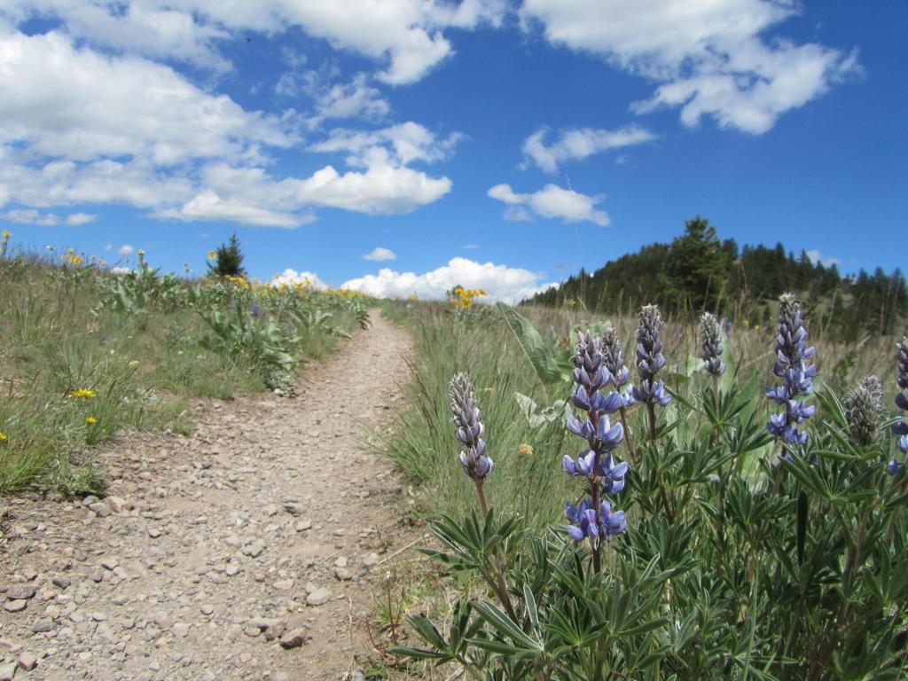 Mt Helena Ridge (and other local trails)  Trip Report-helena-nf-mtb-5.26.17-041.jpg