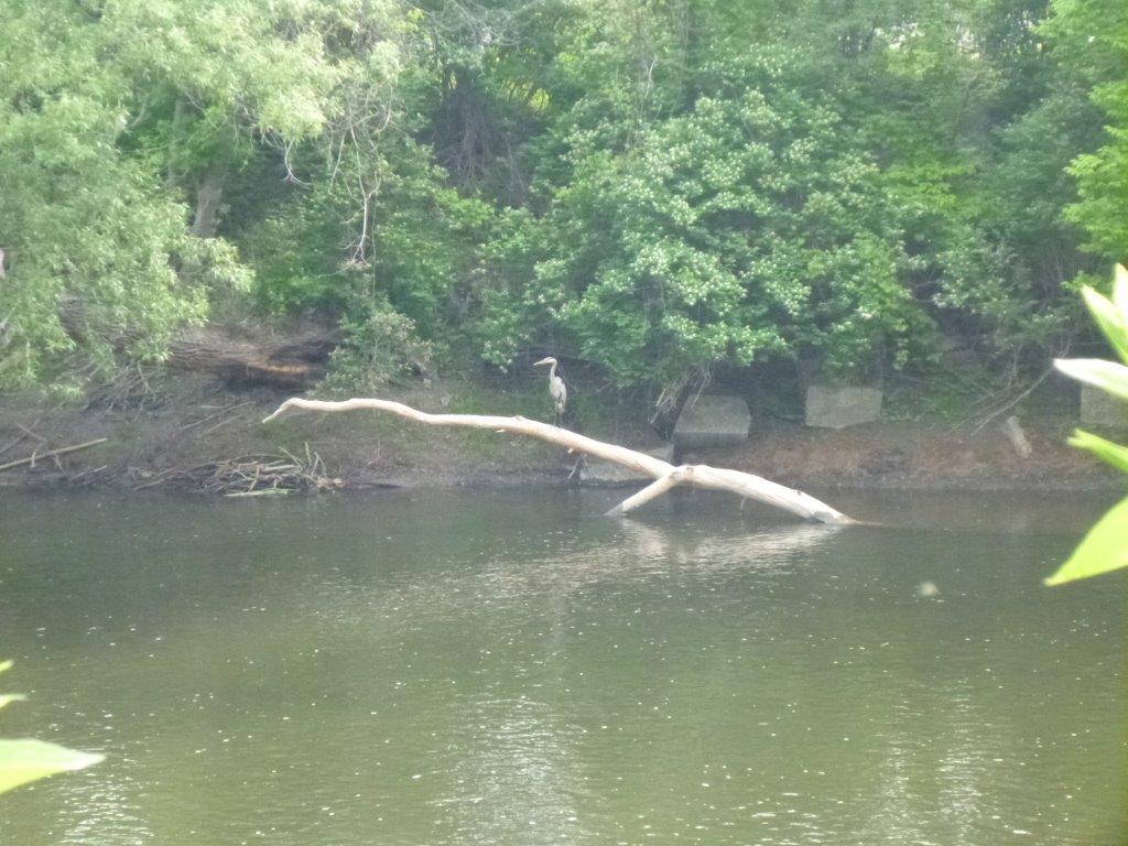 How was your commute today?-heron.jpg