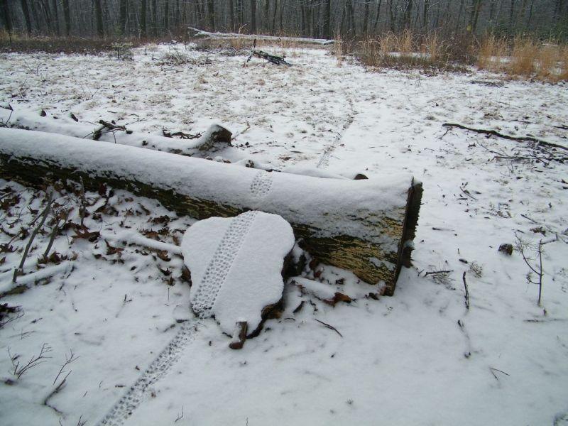A Little Bit of Snow-hgijkgffdxhyjk-.jpg