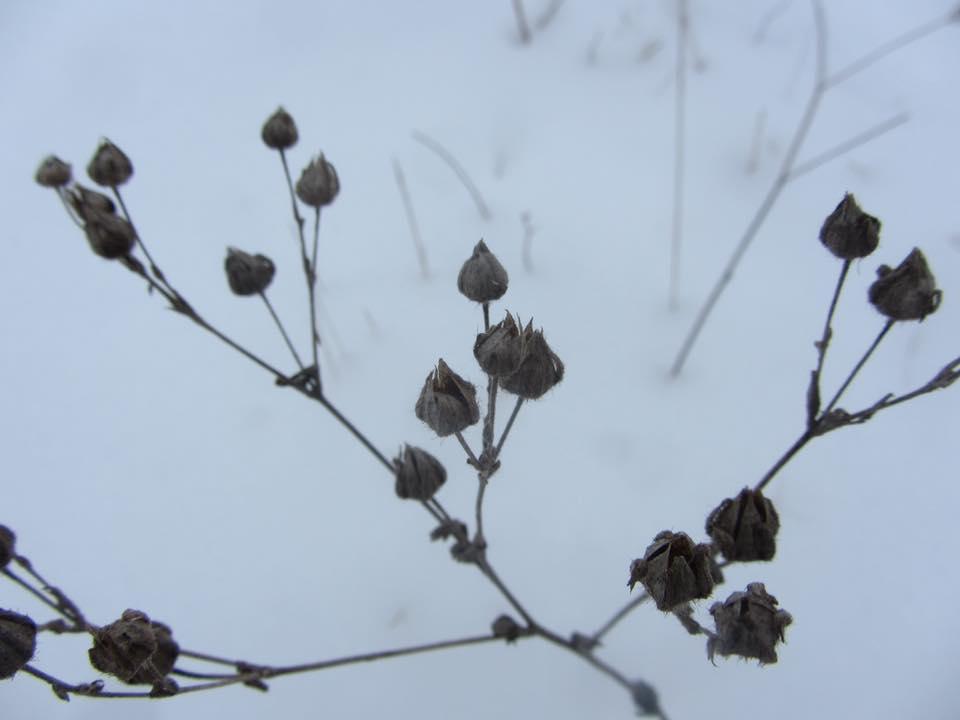 Today's Pic or Story-hibernation.jpg