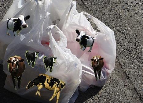 Name:  hidden-fat-cow-plastic-bag.jpg Views: 277 Size:  74.8 KB