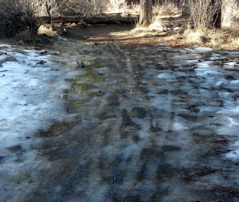2014 - Bend Area Trail Conditions & Blow Down Thread-hike4.jpg