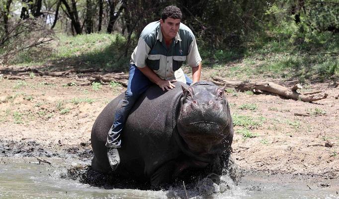 When Animals Attack Thread-hippo_12_682x400_1407157a.jpg
