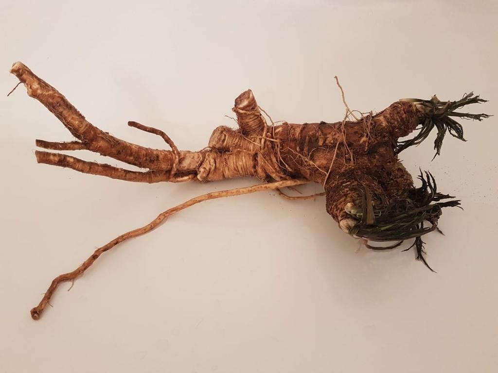 Vegetarian and Vegan Passion-horseradish.jpg