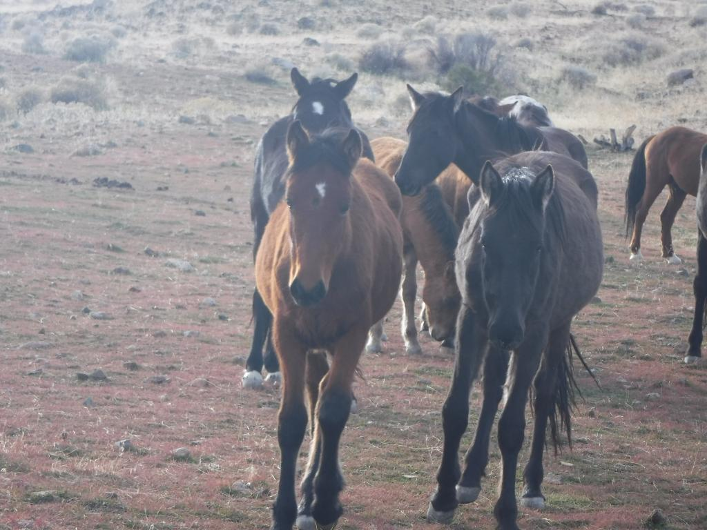 Post a picture or two of your neck of the woods-horses-mounhouse-dec-5-2016-012.jpg