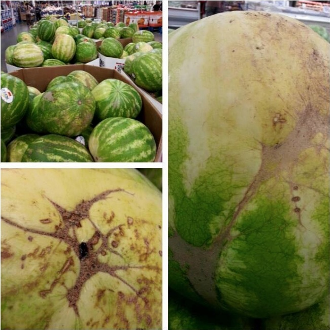 Vegetarian and Vegan Passion-how-pick-watermelon-002.jpg