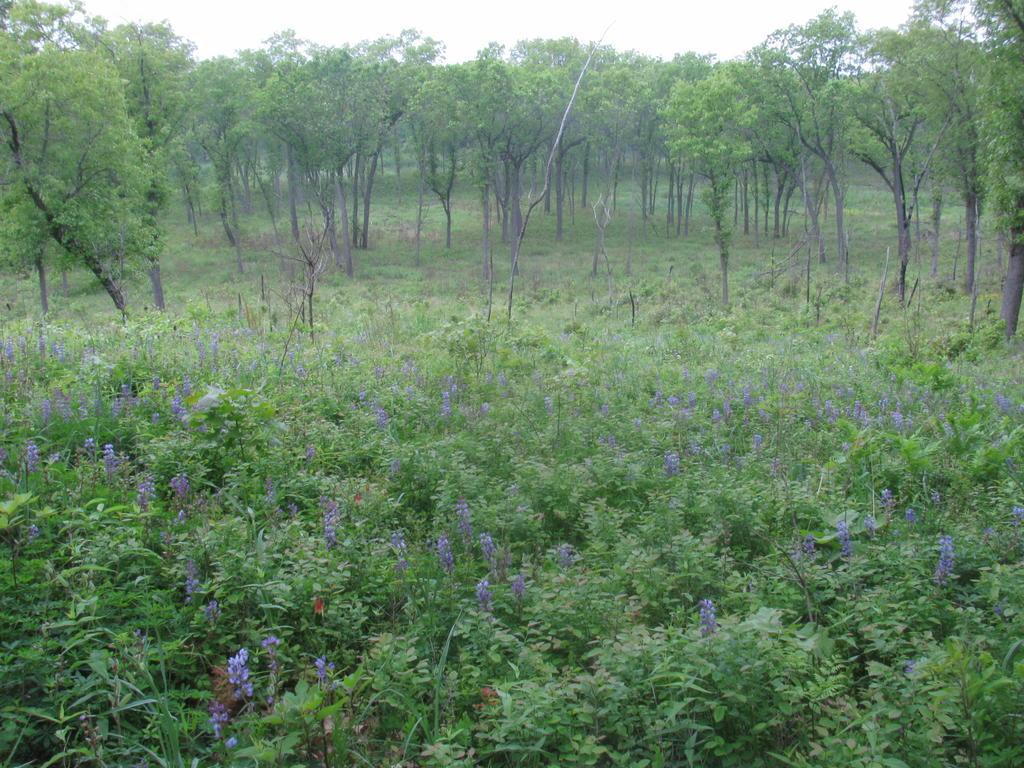 Botany Thread-howes-prairie-3.jpg