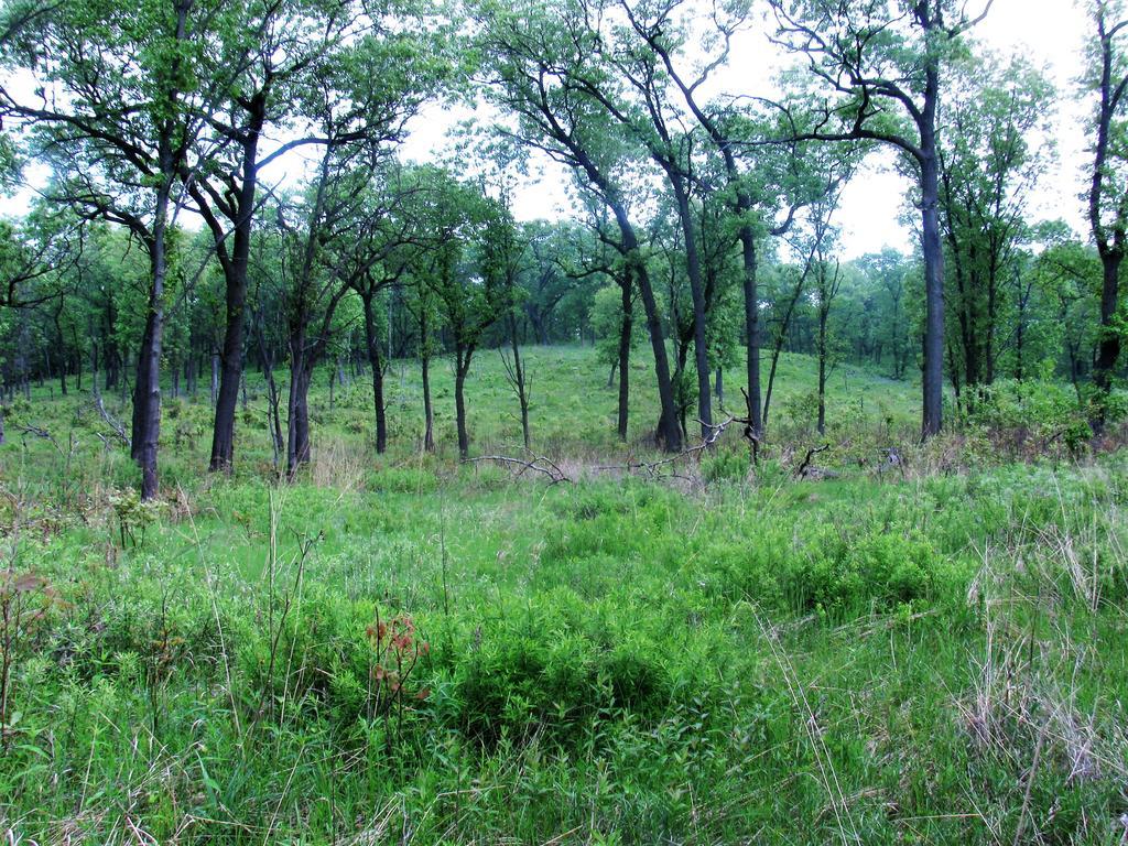 Botany Thread-howes-prairie-6.jpg