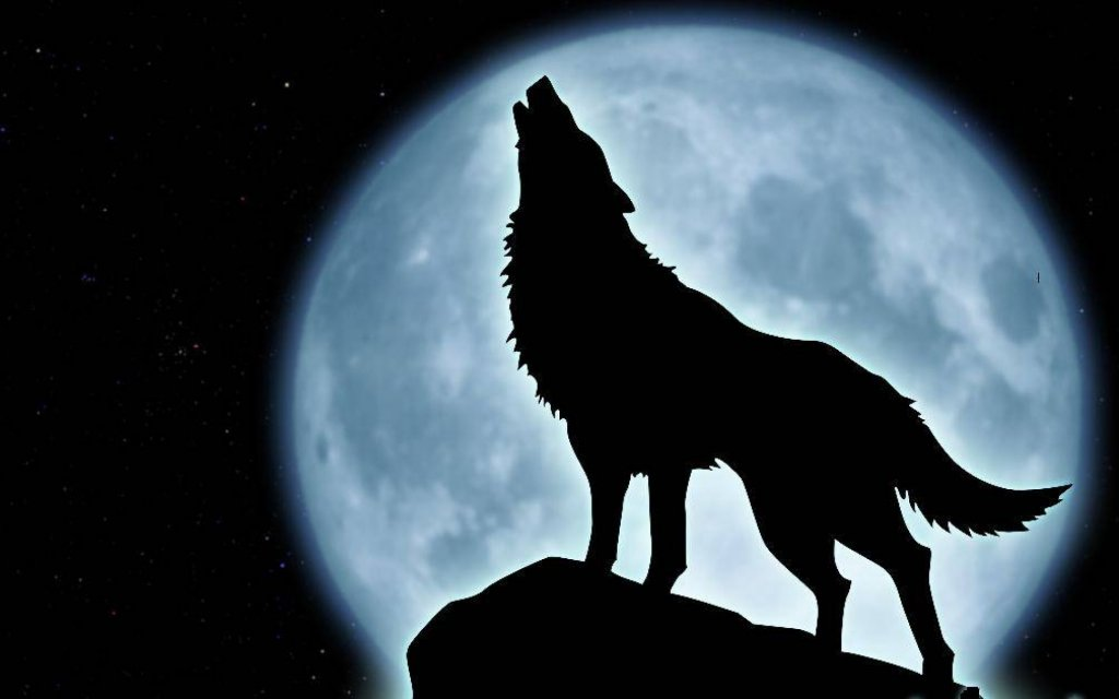 How often do you ride solo?-howling-wolf-wallpaper-10927-hd-wallpapers.jpg