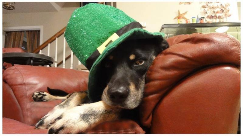 Happy St. Paddy's Day to you.-hspd.jpg
