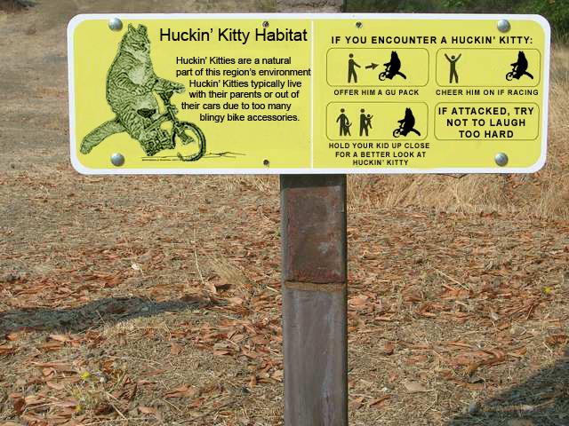 Kitty Sighting-huckin-kitty.jpg
