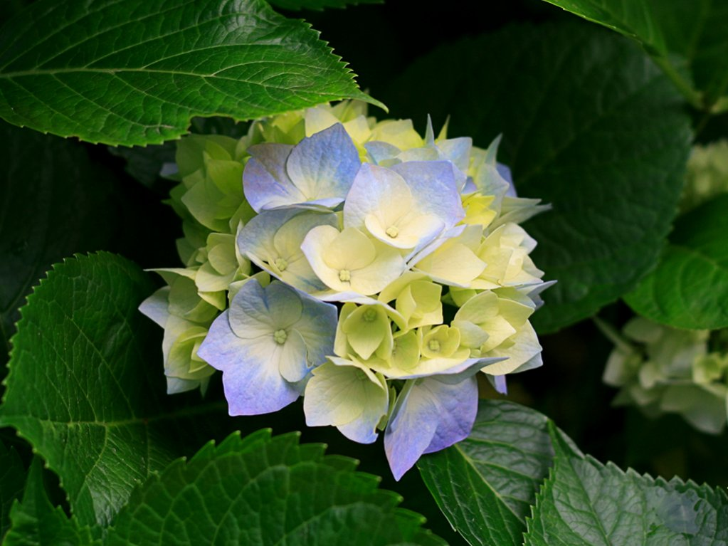 photo upload test-hydrangeas.jpg