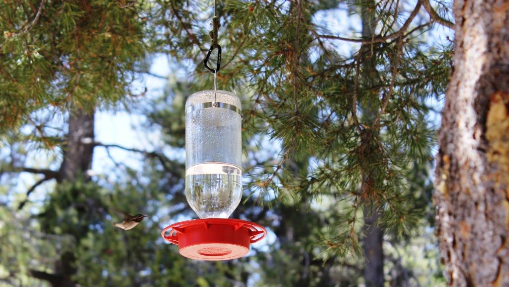 OT: Bird Pix...-i-lake-humming-bird-2-cropped.jpg