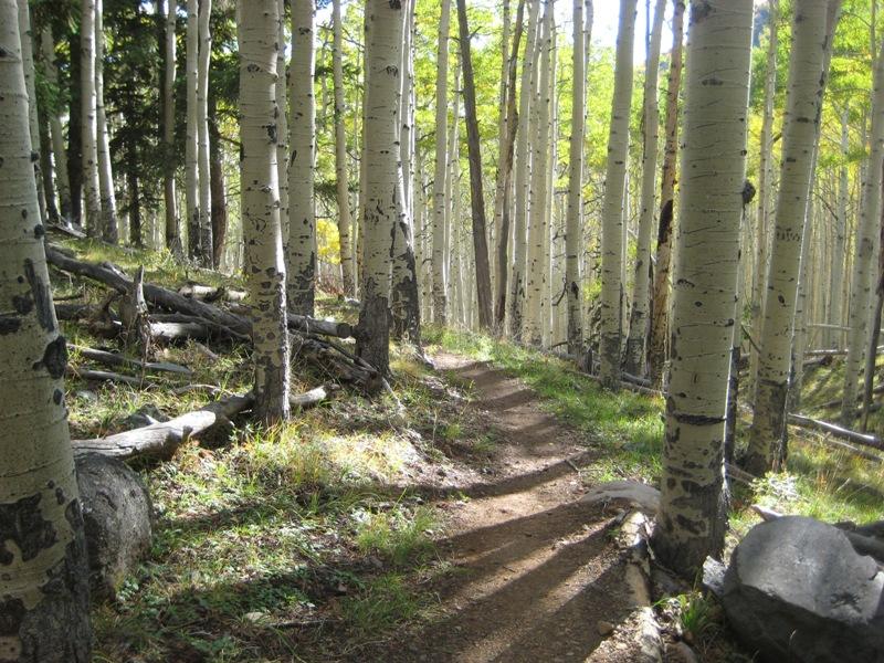 foto friday 9-28-ib-trail.jpg