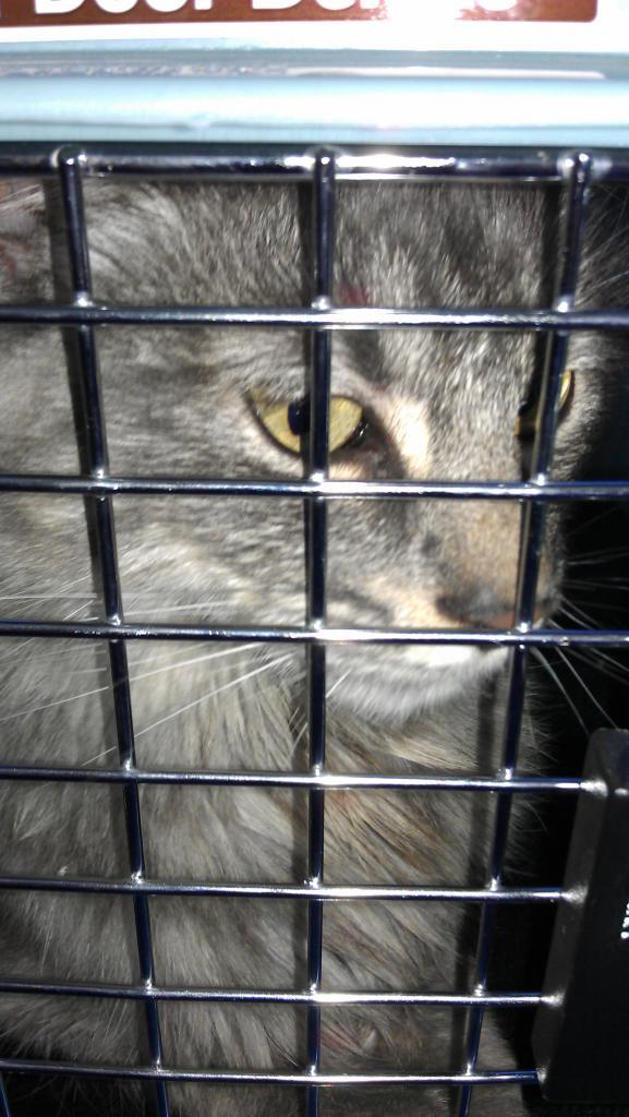 Cat Passion (here kittie, kittie, my new best friend...) Post your cat photos.-imag0019.jpg