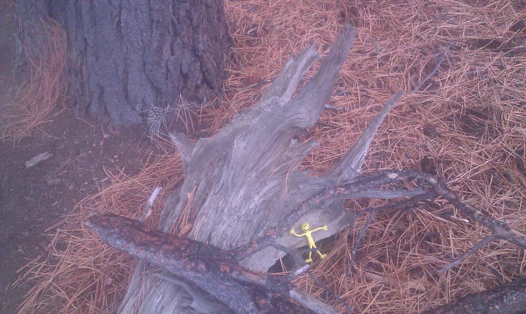 Yellowman game-imag0115.jpg