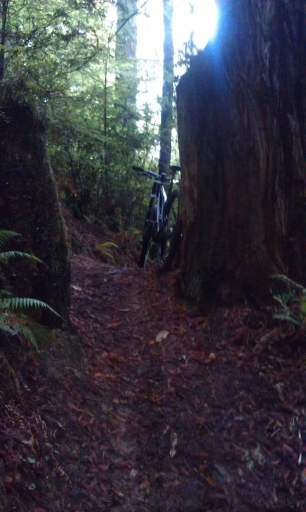After Thanksgiving rides in Fort Bragg?-imag1088-612x1024-.jpg