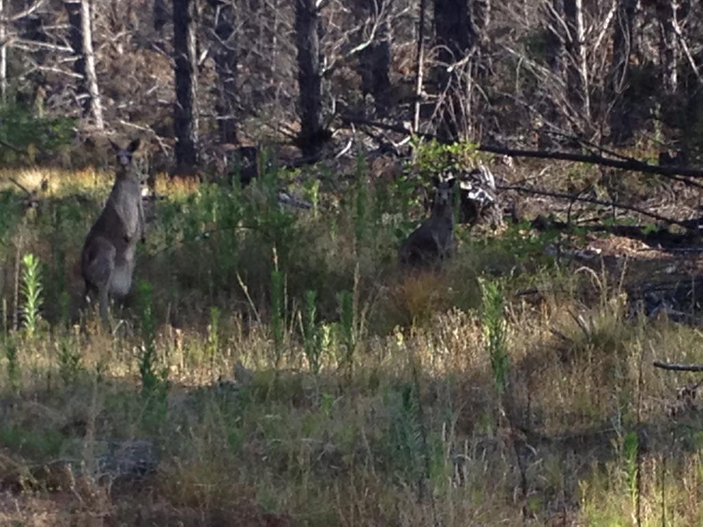 Wildlife you have seen on trail...post your pics...-image.jpg