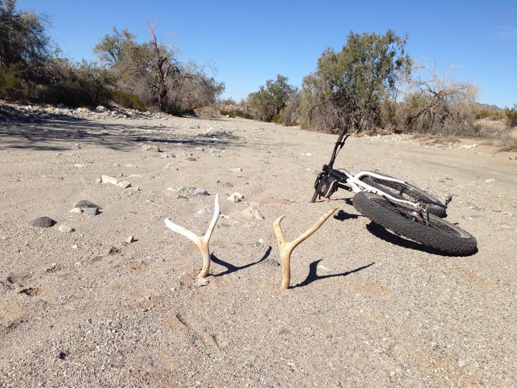 Fatbike Odyssey 2013-image.jpg