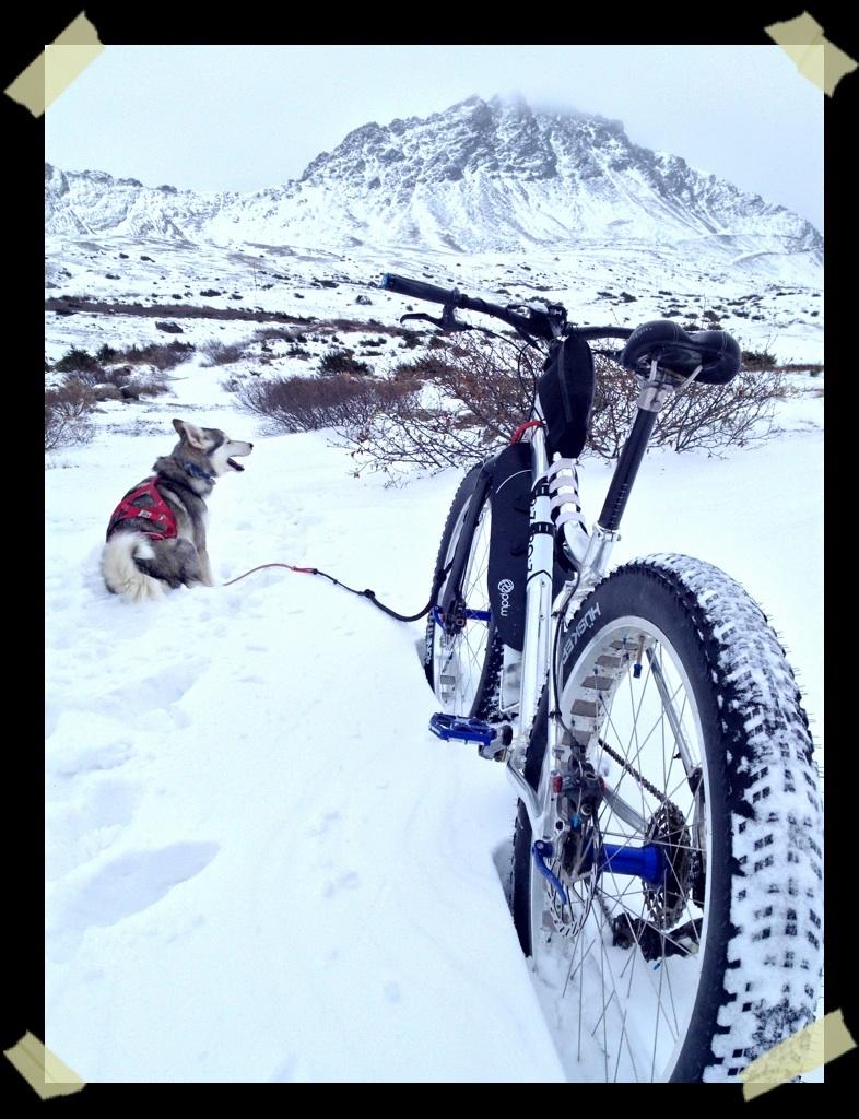 Bikejor thread!-image.jpg
