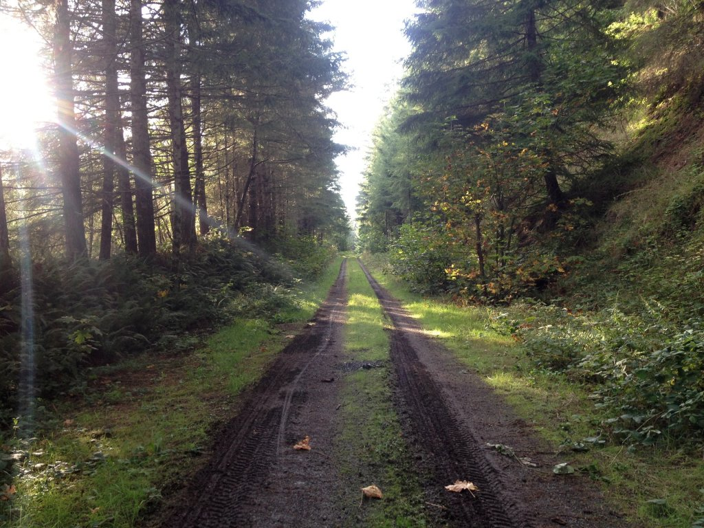 Crown Zellarbach Vernonia to Scappoose & Back 9.20.13-image.jpg