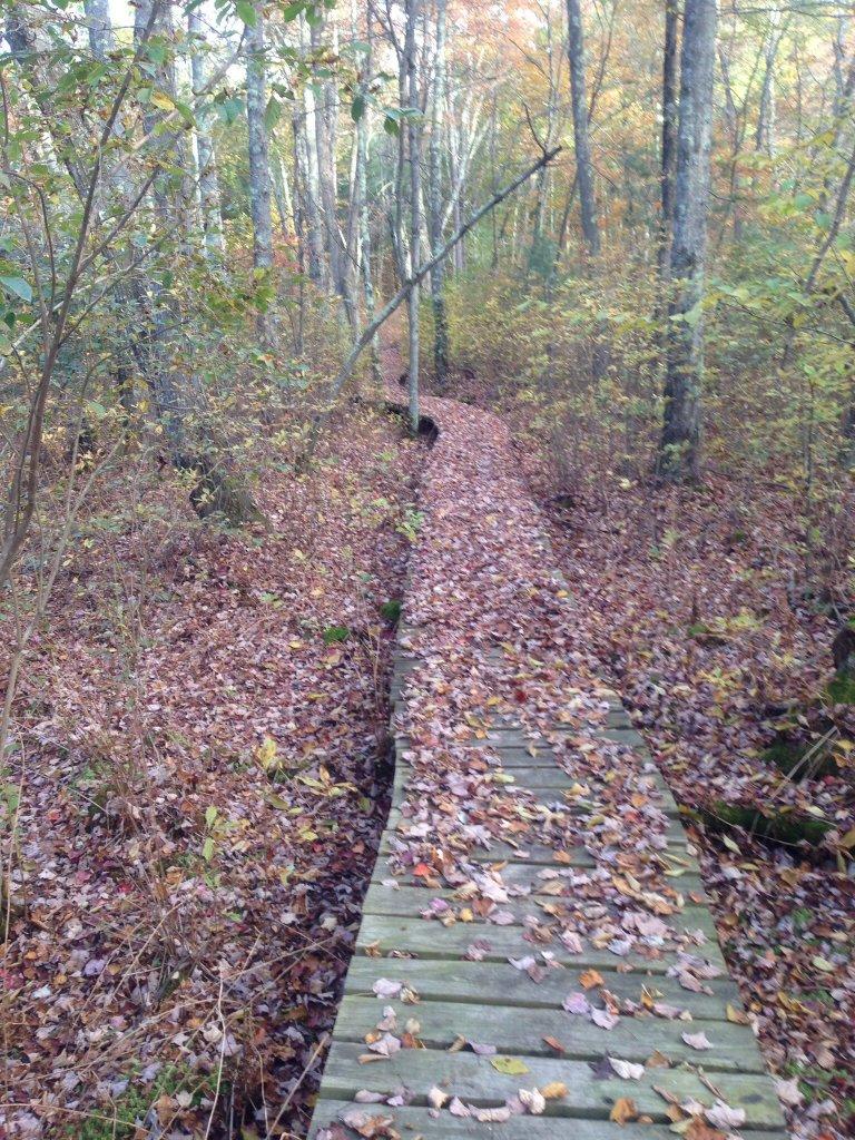 Post Pics of your Fall Foliage!!-image.jpg