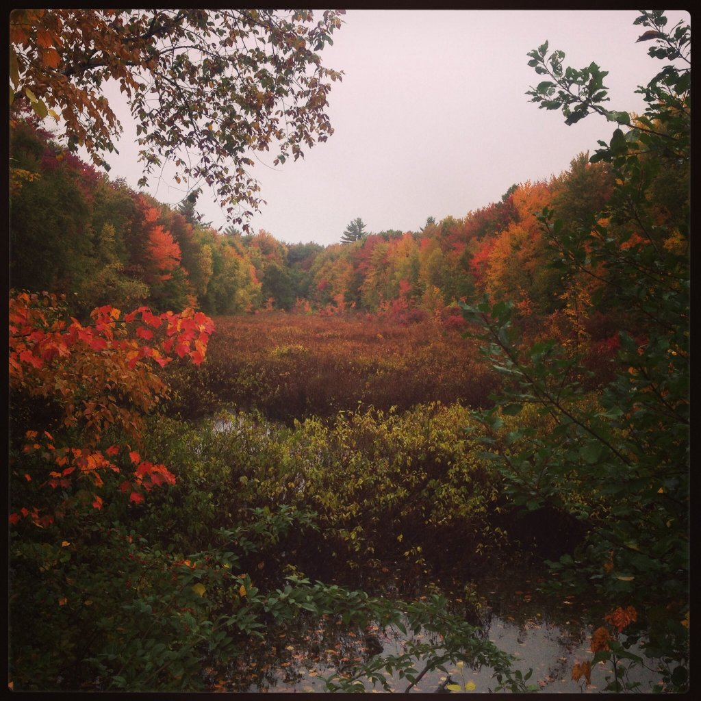 Post Pics of your Fall Foliage!!-image.jpg