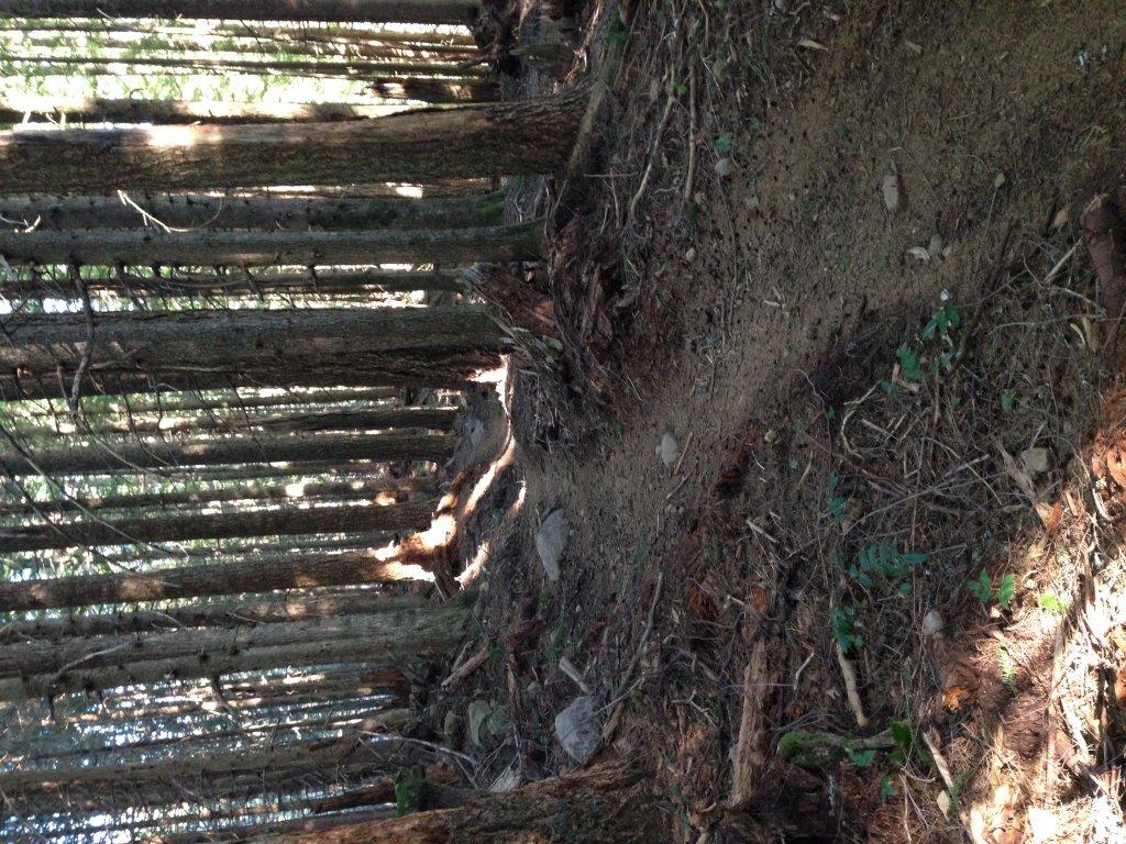 Sandy Ridge-image.jpg