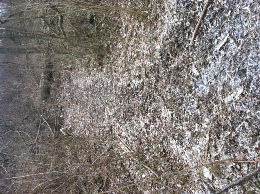 MTB Trail Building HELP!!!-image.jpg